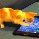game for cats app katten